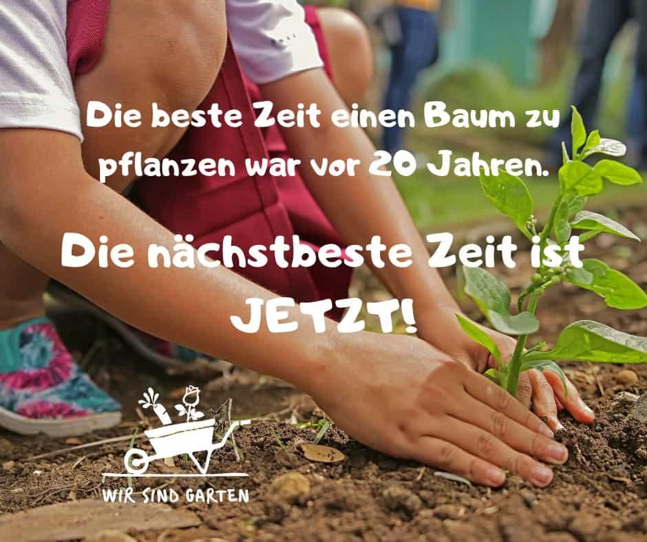 Jetzt einen Baum pflanzen!
