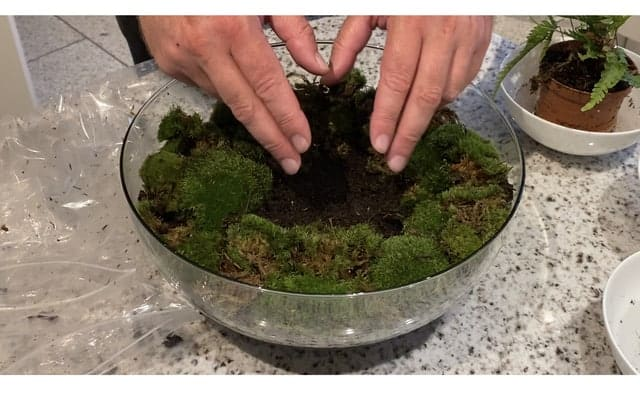 EIne Pflanze im Glas