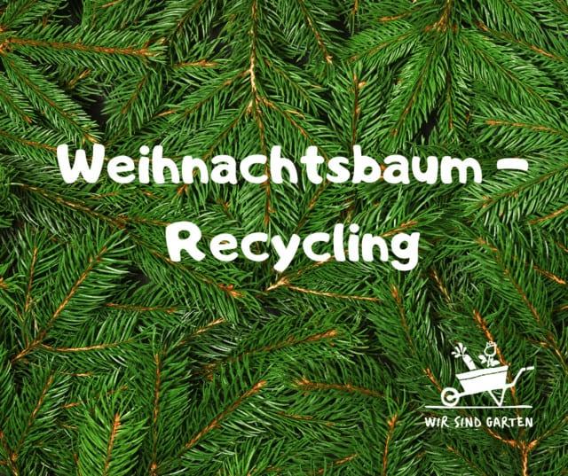 Weihnachtsbaum Recycling
