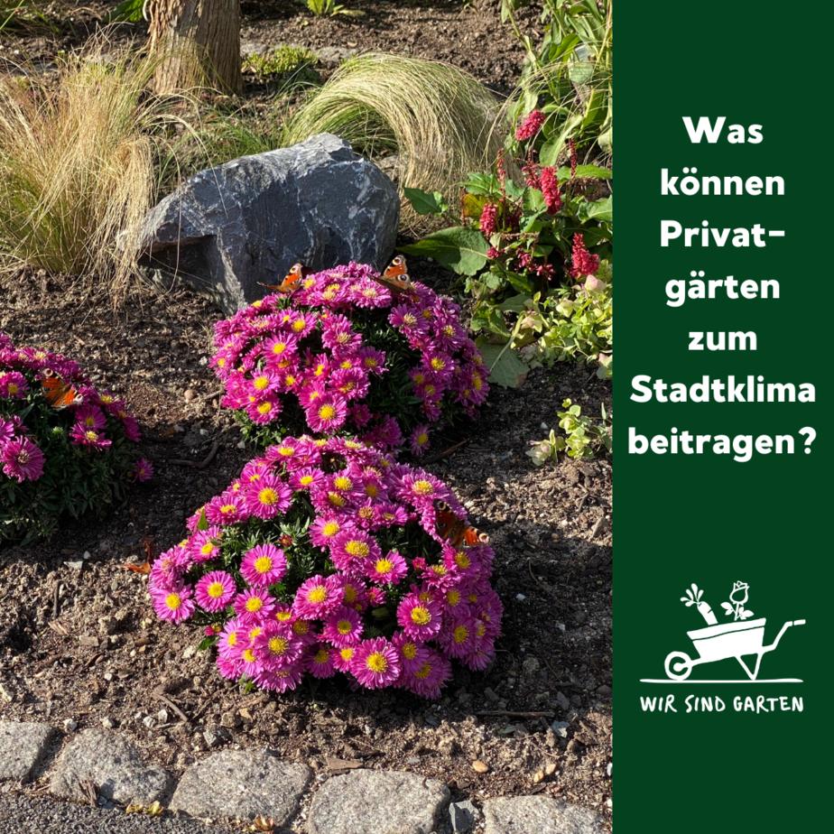 Grüne Vorgärten helfen dem Stadtklima