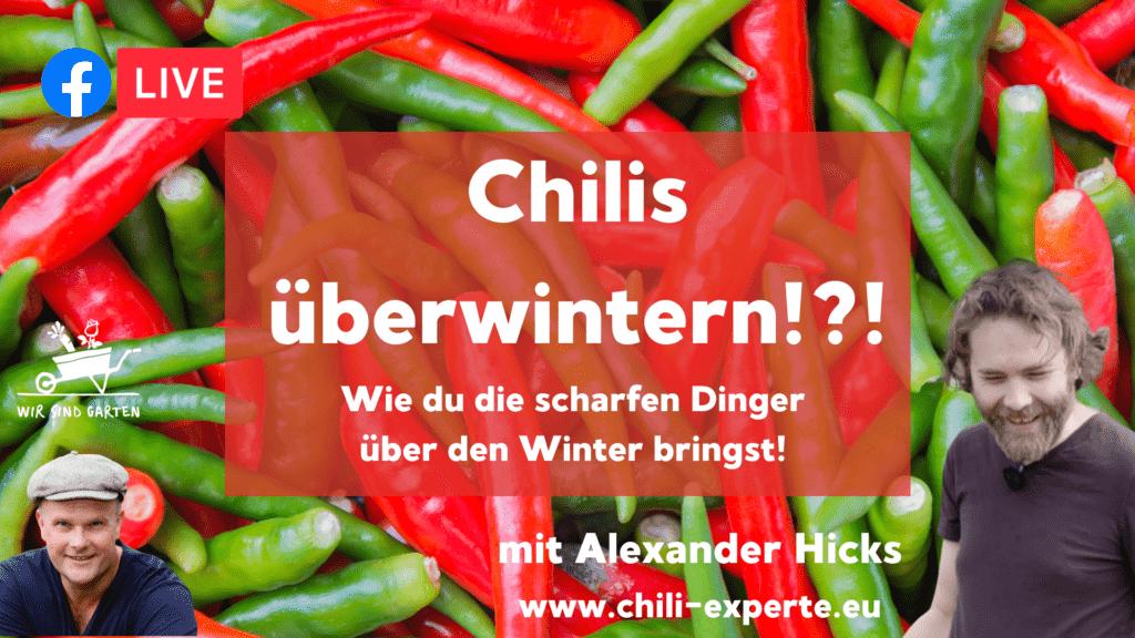 Chilis überwintern