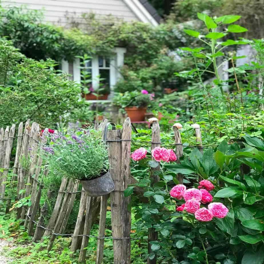 Gartenfoto