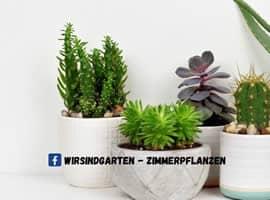 Facebook Gruppe Wir sind Garten - Zimmerpflanzen